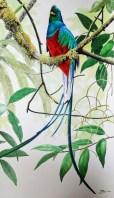 David-Mex-Quetzal
