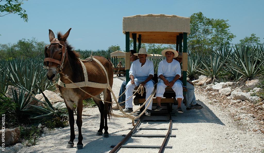 Lo Mejor de Yucatán este Mes: Diciembre 2019
