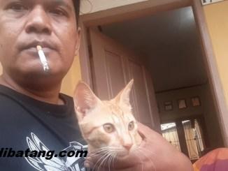 menegur orang gangguin kucing