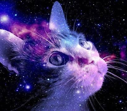 animals-backgrounds-cats-galaxy-Favim.com-3844593