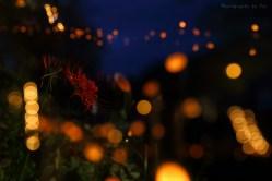 山口市 アートふる リバーナイト 竹灯籠