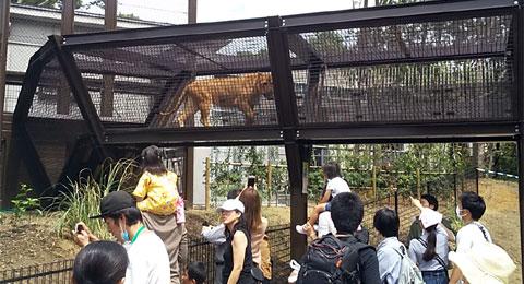 新ライオン舎の目玉