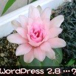 WordPress 2.8でShadowbox JSとHead Cleanerの動作をチェック