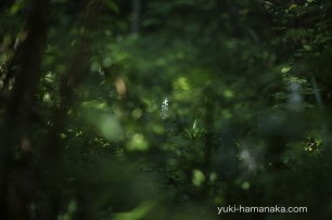 ever_green_023