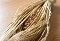 食物繊維 納豆