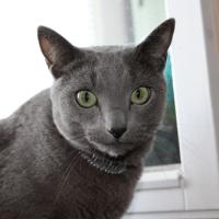 猫でもできるドイツ語講座 パート32