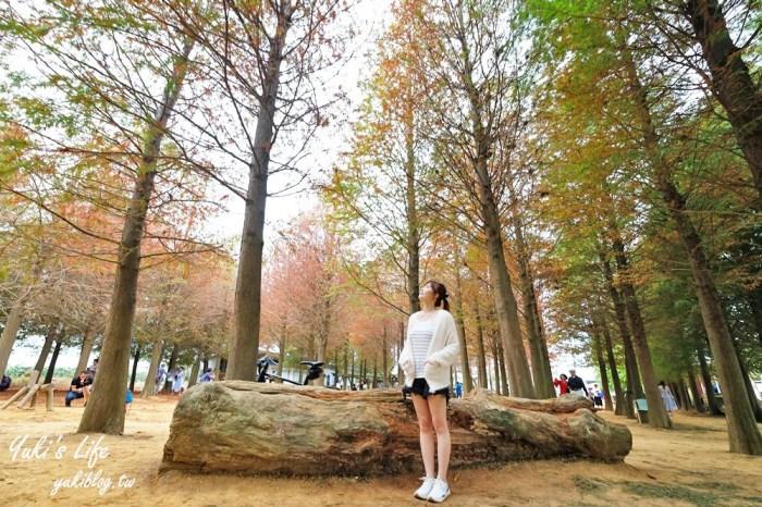 南投景點【南投139縣道落羽松】紅黃綠三色森林!繪本童話秘境拍照打卡去!