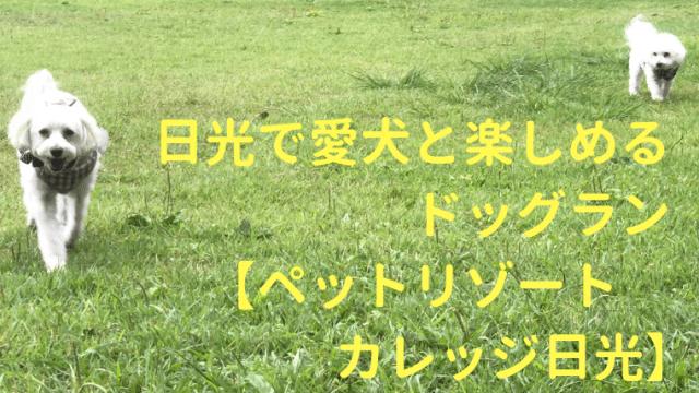 日光で愛犬と楽しめるドッグラン【ペットリゾートカレッジ日光】 アイキャッチ