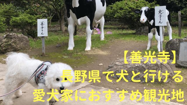 【善光寺】長野県で犬と行ける愛犬家におすすめ観光地 アイキャッチ