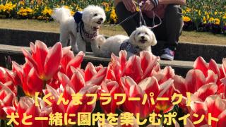 【ぐんまフラワーパーク】 犬と一緒に園内を楽しむポイント アイキャッチ