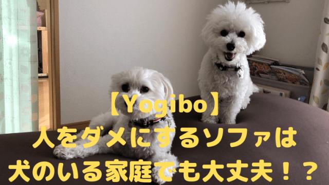 【Yogibo】 人をダメにするソファは 犬のいる家庭でも大丈夫!? アイキャッチ