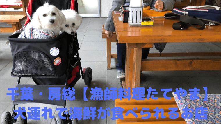 【漁師料理たてやま】 犬連れで海鮮が食べられるお店【千葉・房総】 アイキャッチ