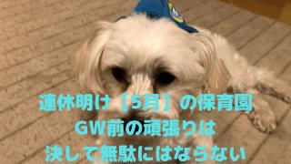 連休明け【5月】の保育園 GW前の頑張りは 決して無駄にはならない アイキャッチ