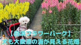 【白浜フラワーパーク】 犬も大歓迎の海が見える花畑 アイキャッチ