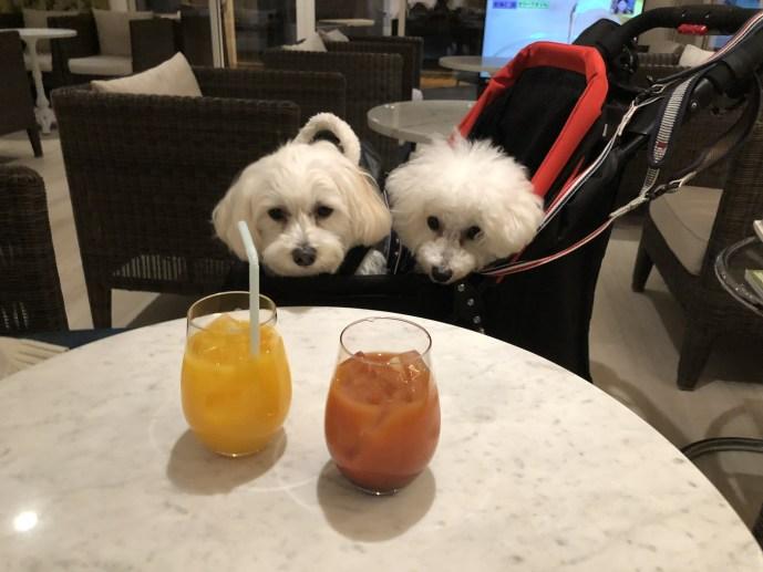 【ドギーズアイランド】愛犬と行く犬のための楽園の過ごし方【千葉】 ドリンク