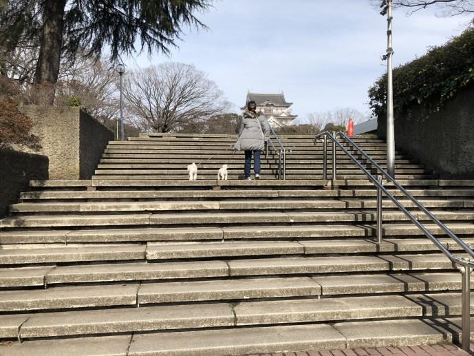 亥鼻公園の【いのはな亭】で犬と一緒に美味しい甘味を食べよう! 入口