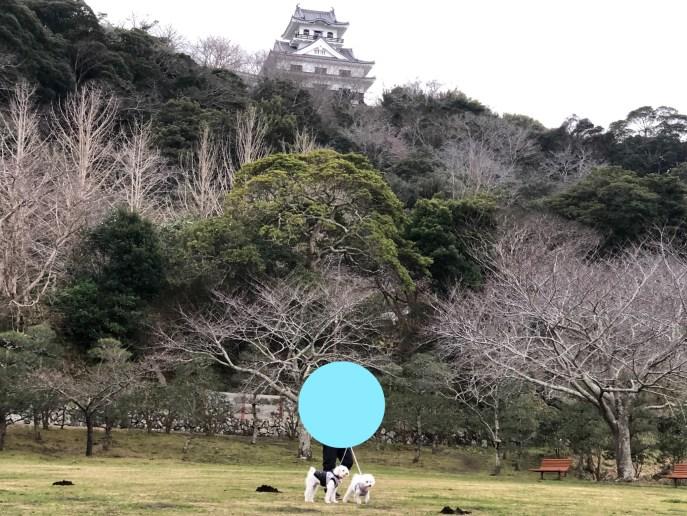 【城山公園・館山城】で犬と一緒に城や自然を満喫しよう【千葉】 茶屋からの館山城