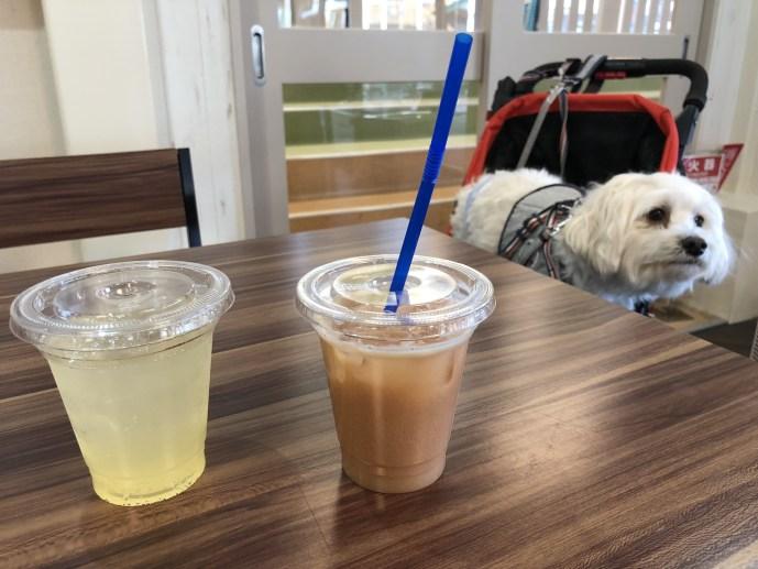 【那須ハイランドパーク】犬と乗り物であそべる遊園地の楽しみ方 カフェ内