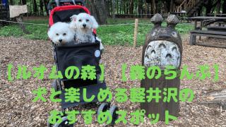 【ルオムの森】【森のらんぷ】 犬と楽しめる軽井沢の おすすめスポット アイキャッチ
