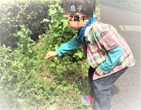 雑草の茂みを観察する息子