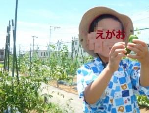 share-farm201807-12