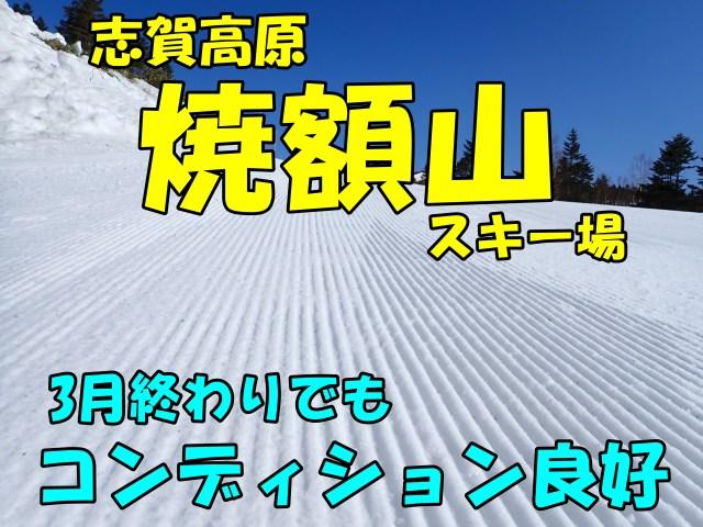 志賀高原焼額山スキー場。3月終わりの早朝営業滑走。雪質問題なし。