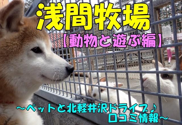 浅間牧場【動物と遊ぶ編】~ペットと北軽井沢ドライブ♪口コミ情報~