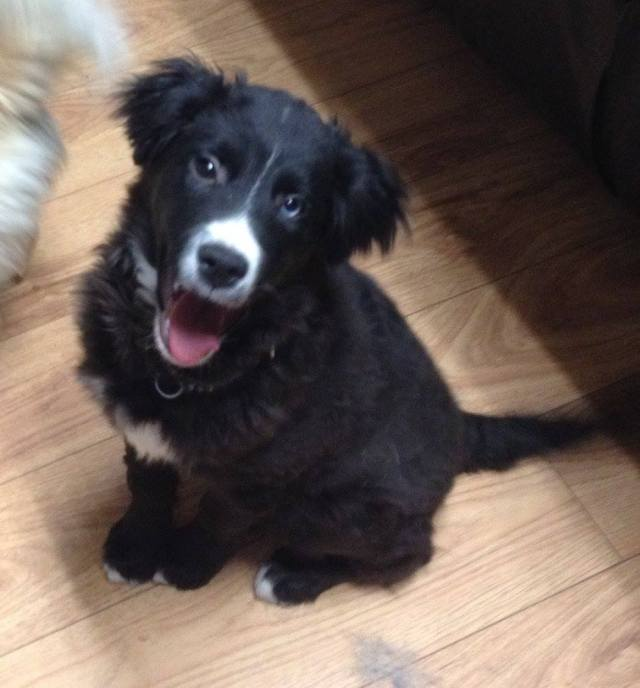 Oreo is a 5-month-old male, who is looking for a home.
