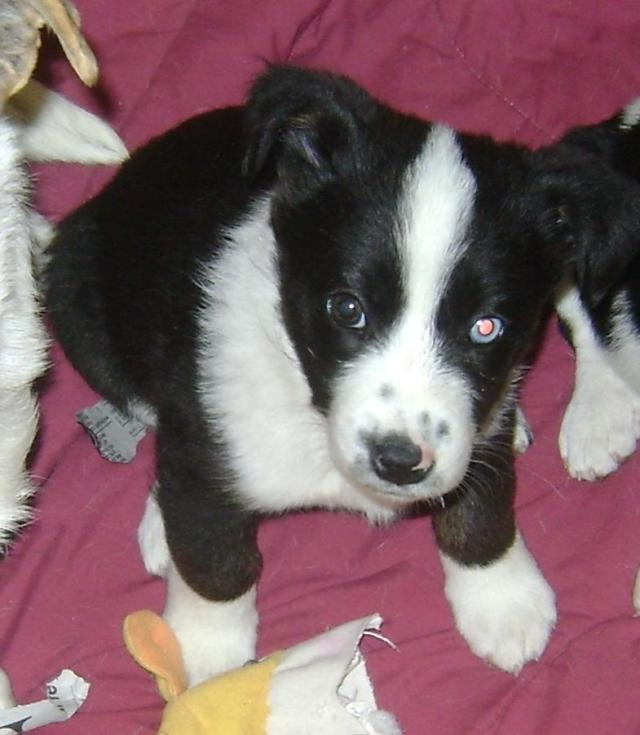 Triangle is a female, small-breed pup.