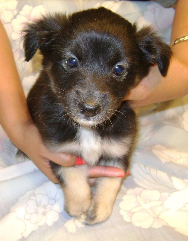Cake is a female, small-breed puppy.