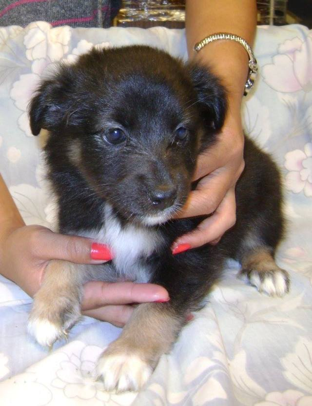 Pie is a female, small-breed puppy.