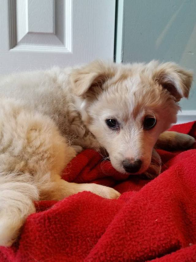 Scarecrow is a male, small-breed puppy.