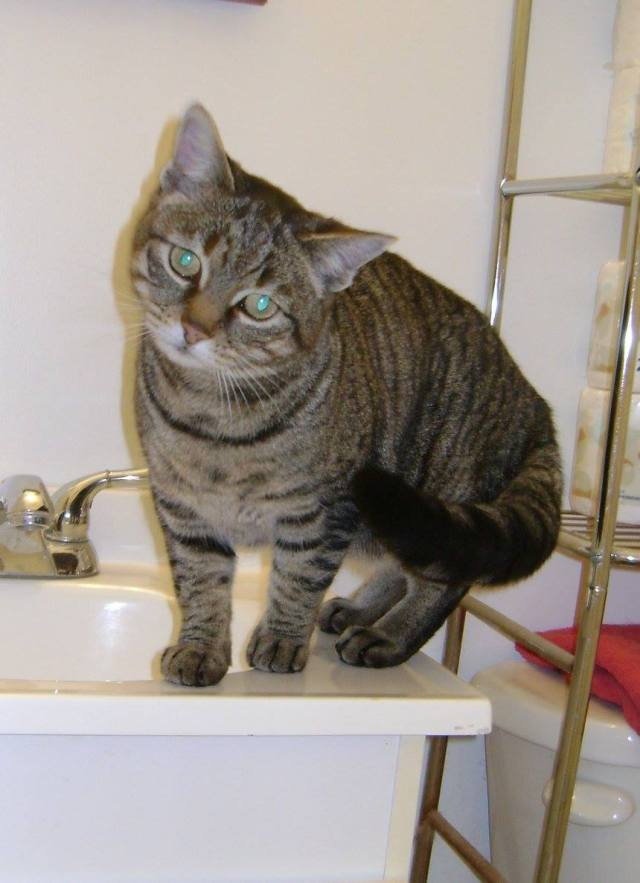 Nelly is a female tabby cat.