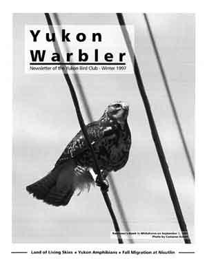 Yukon Warbler Winter 1997