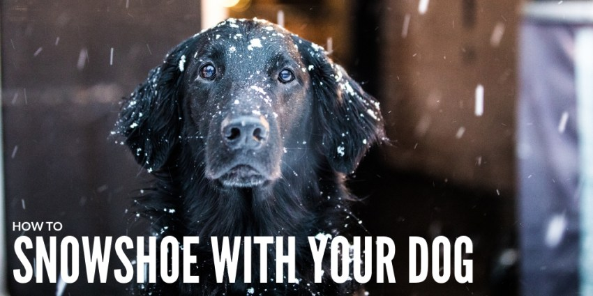 How to Snowshoe with Your Dog