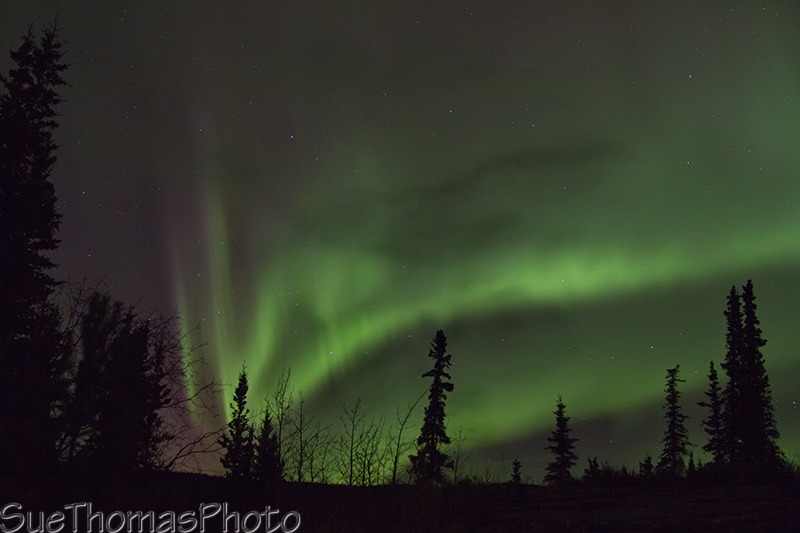 Northern Lights Next Showing
