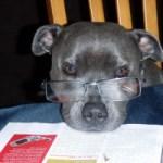 犬の病気 「手術するべき?」何が彼にとってしあわせなのか考え中