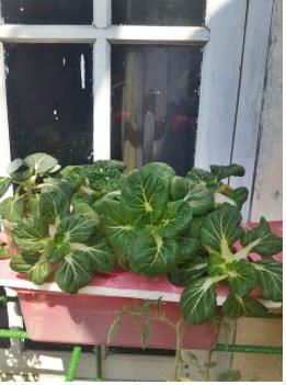 tanaman6