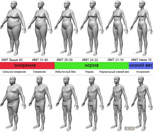 Правильное питание | третий этап | стадии ожирения