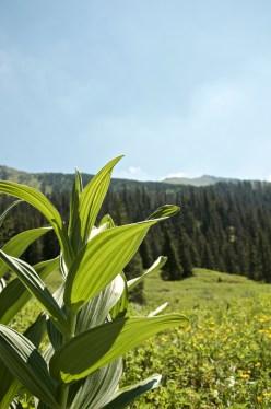 Dolina Tomanowa