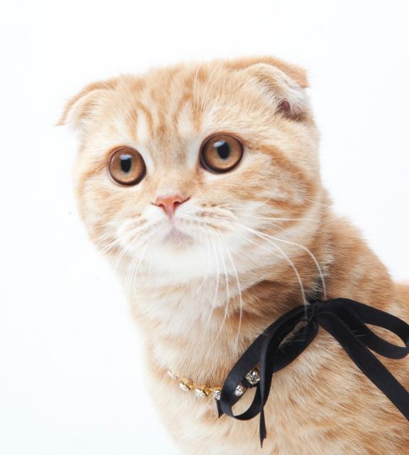 neckless-cat
