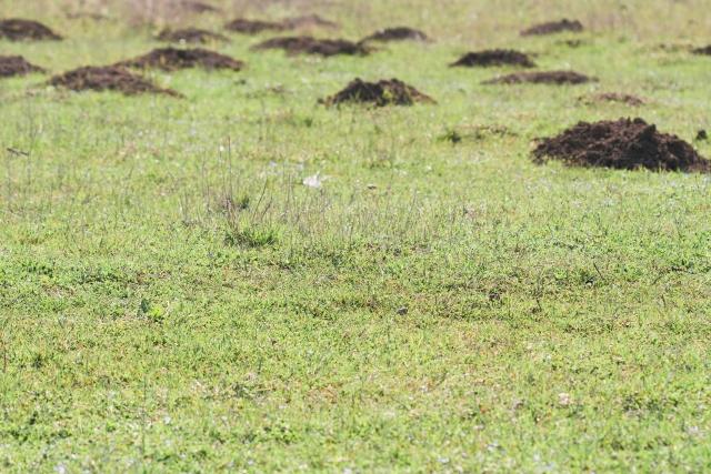 荒らされた芝生