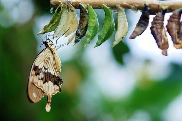 蛾が羽化する