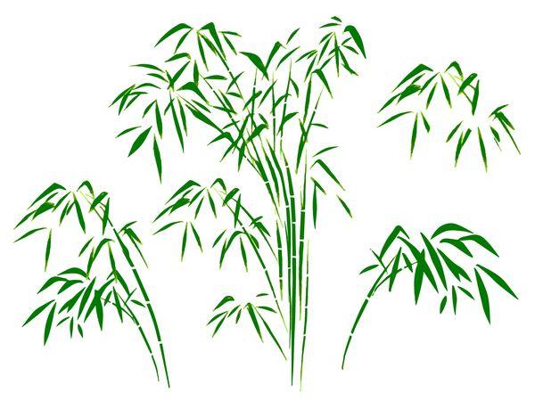 庭に竹が生える