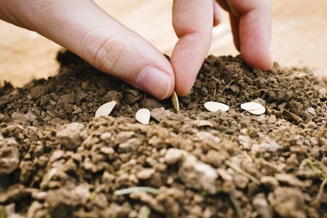 土に種をまく