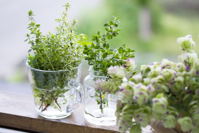 観葉植物に水をあげる