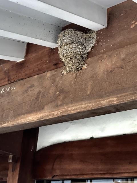 鳥の巣に鳥がいない