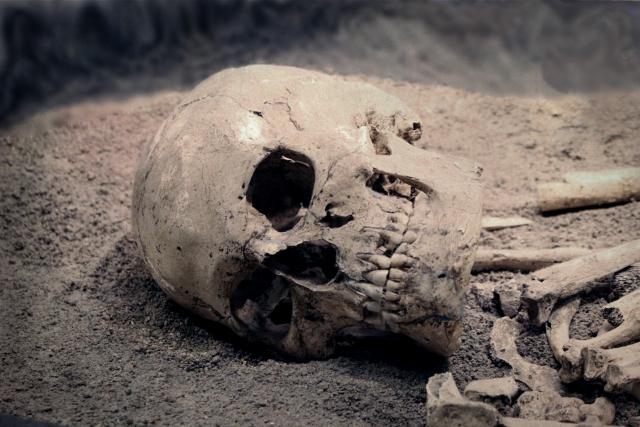 バラバラ死体を見る