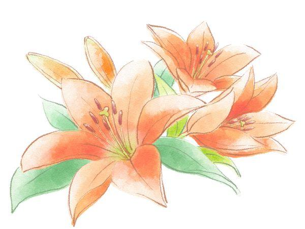 オレンジ色のユリの花