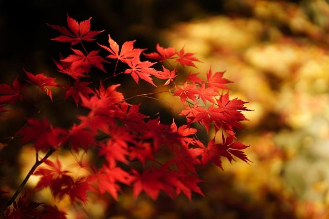 紅葉を夜見に行く